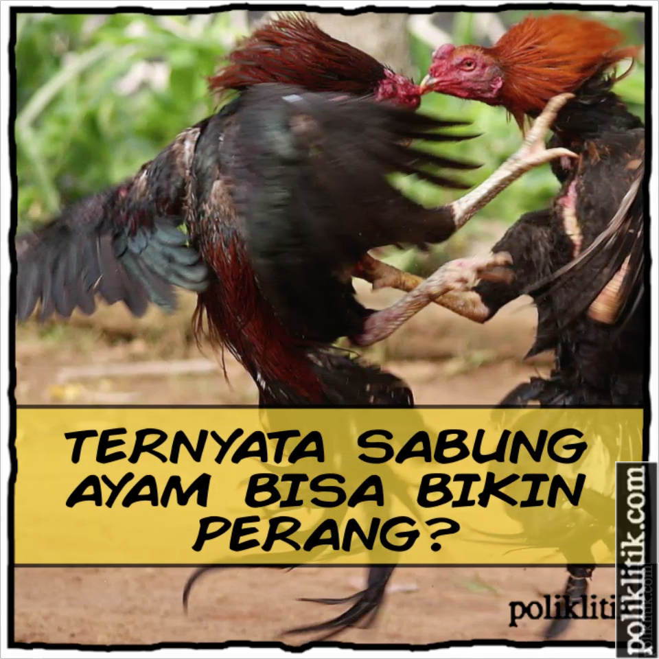 Sabung Ayam Sebagai Sarana Politik