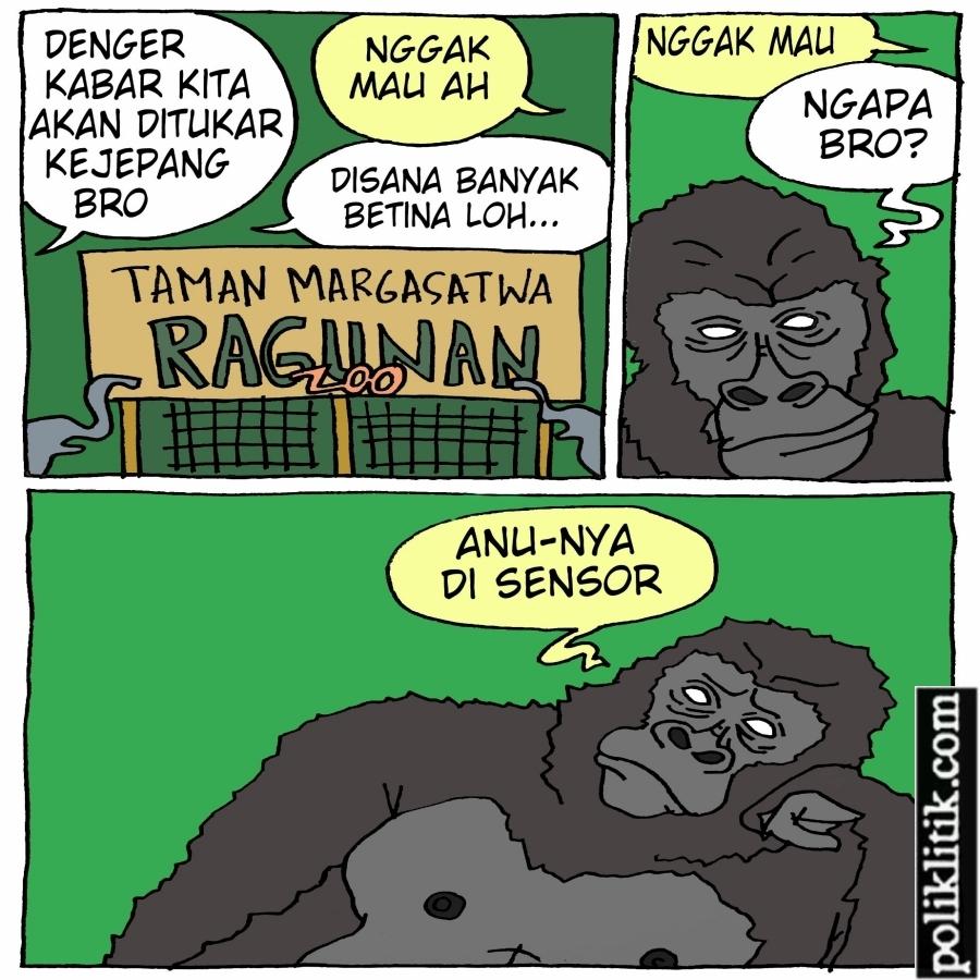Pertukaran Gorila