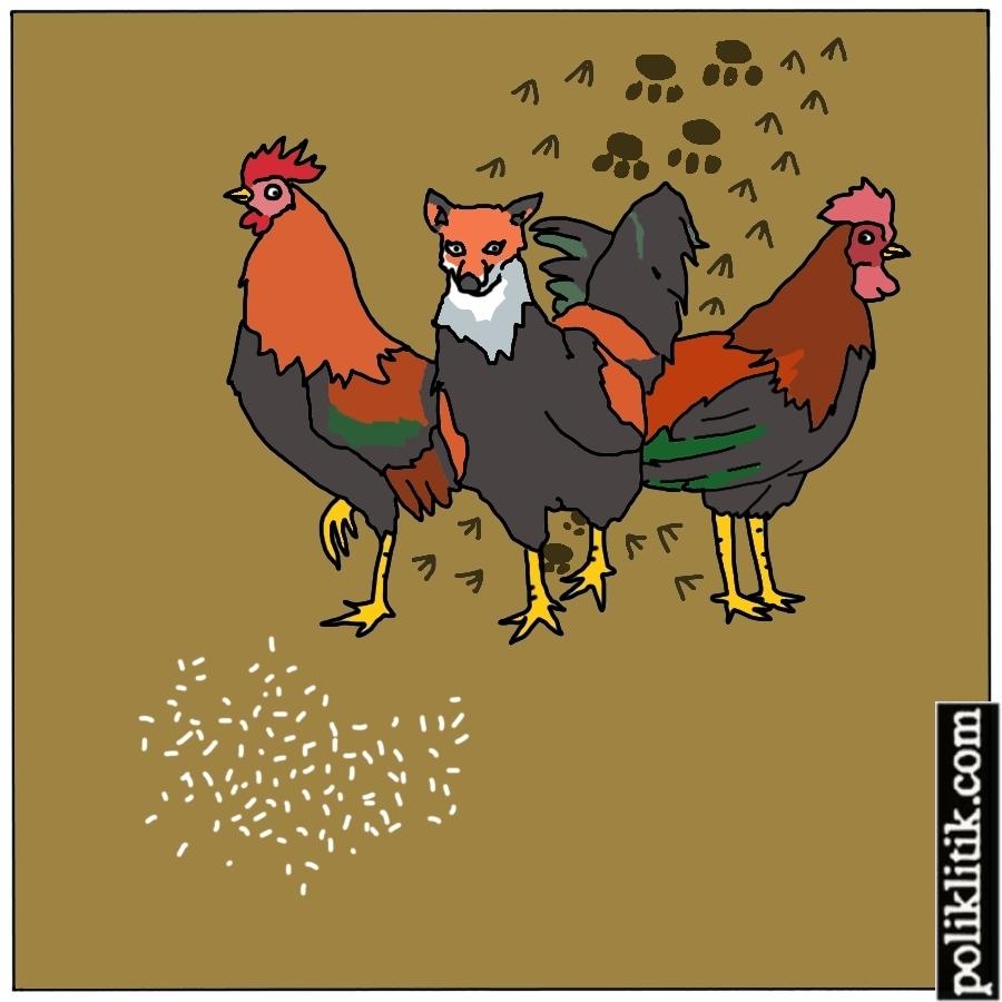 Musang Berbulu Ayam